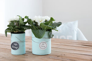 Bildno.: 12313256<br/><b>Feature: 12313229 - Tinned Pleasure</b><br/>Recycle food tins to create pastel coloured planters<br />living4media / Algermissen, Astrid