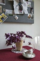 A pot plant on a table with a red tablecloth and pin board hung with photos