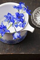 Delphiniums on a white jug and a grey surface