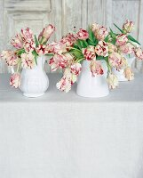 Red and white parrot tulips in jugs