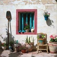 A Mediterranean atmosphere - geraniums in a terracotta pots in front of a window with wooden turquoise bars