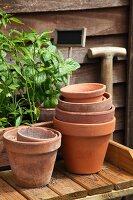 Vegetable plants, flowerpots and labels