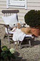 Dog snoozing on deckchair with white cushions and straw hat