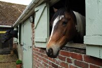 Stable with exposed brickwork, closed stable door and horse looking out of window with shutters
