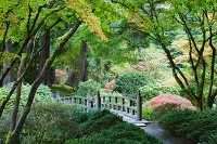 Authentic, Japanese arch bridge in the Tea Garden in Portland