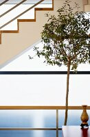 Slim houseplant in front of modern staircase and frosted glass wall