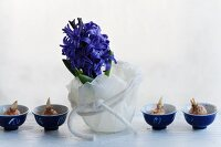 Hyacinth in wax bowl, crocus bulbs in small dishes