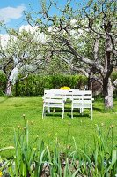 White-painted garden furniture below apple tree