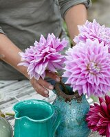 Arranging pink dahlias in jug