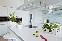 Crate of vegetables and potted herbs on breakfast bar with hob in ultra-modern kitchen