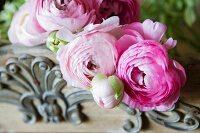 Pink ranunculus on carved wooden tray