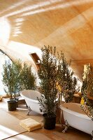 Potted olive trees and vintage bathtubs in room with barrel vaulted ceiling