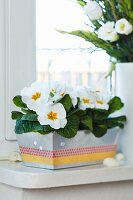 Loaf tin used as planter for primulas