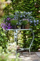 Arrangement of purple flowering garden plants on romantic garden table in front of green hedge