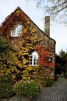 Gable facade of old, Norwegian house covered in colourful, autumnal climbers