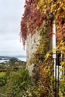 Stone facade covered in autumnal climber foliage and view of cloudy sky over ocean