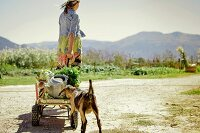 Young woman pulling farm produce on hand cart