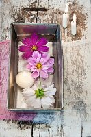 Cosmos flowers and floating candle floating in old loaf tin on wooden surface with peeling paint