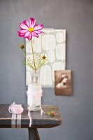 Variegated cosmos flower in old glass bottle wrapped in paper and colour-coordinated woollen yarn