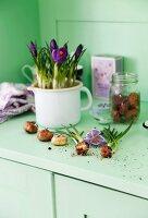 Purple crocuses planted in white enamel jug