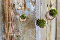 Tiny succulents planted in Roman snail shells hung from cords