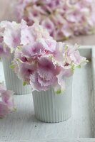 Pink hydrangeas in white beakers