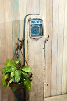 Houseplant hanging from old, petrol-station air pump against simple wooden wall