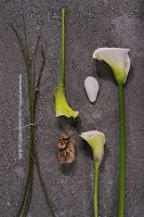White calla lily flowers and bulb next to stems on stone surface