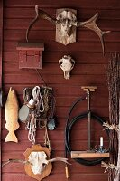 Various hunting trophies and tools hung on falu red wooden wall