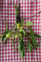 Mistletoe on gingham cloth
