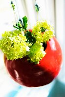 Lime green viburnum flowers in red, suspended, spherical plant pot