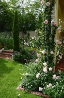 Climbing rose 'Eden' on house façade and cypress tree next to steps in garden