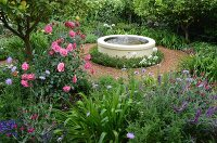 Pink rose bush below lemon tree in flowering garden with fountain in round concrete pool