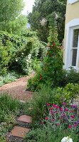 Purple-flowering pinks (Tribus sileneae) and red-flowering nasturtiums lining garden path