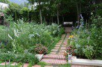 Garden path paved with red tiles between beds of artichokes and other plants
