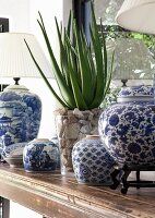 White and blue painted vases, table lamps and aloe vera planted in glass vase