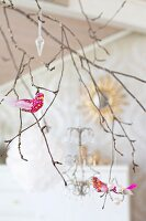 Brightly coloured ornamental birds on branch