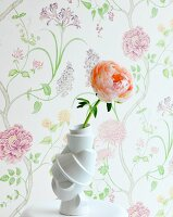 Apricot rose in front of floral wallpaper