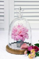 Peony bloom & heart ornament under glass cover