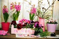 Hyacinths, violas, primulas & willow catkins on plant table