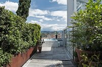 Foliage plants in planters on wooden roof terrace with pool