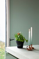 Potted herbs and lit candles in metal candlesticks