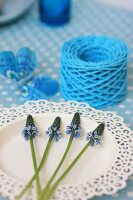 Grape hyacinths on white plate with ornate rim and reel of light blue string
