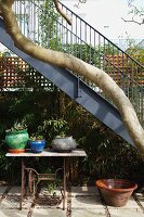 Potted plant on vintage sewing machine frame under twisted tree trunk and metal exterior staircase in courtyard