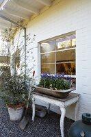 Trough of flowering plants on rustic table below lattice window in whitewashed façade