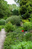 Gravel path leading through densely planted garden