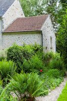 Ferns in garden outside stone house with extension