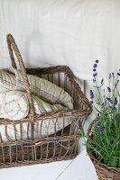 Blanket in basket and flowering, potted lavender