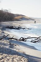 Flotsam on the Baltic Sea coast