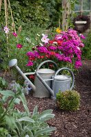 Zinc watering cans in front of flowering plants in various shades of pink; sage in foreground
